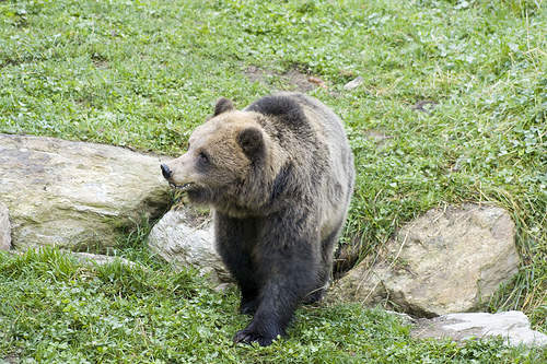 Parco naturale adamello brenta for Cabina di montagna grande orso