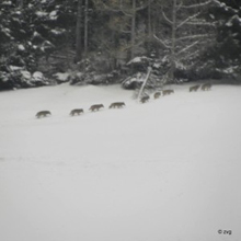 Una foto del branco - photo by Wwf Svizzera