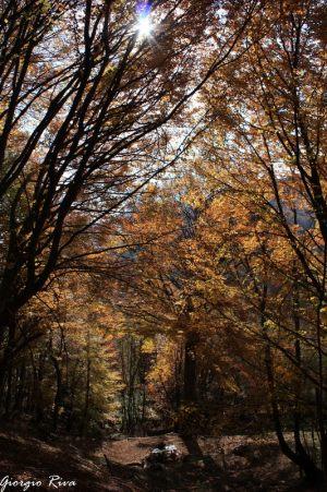 autunno-x-sali